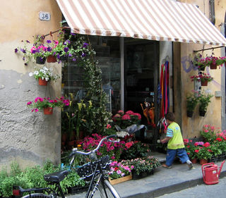 Geraniums in France
