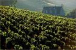 Vineyard_shot_pretty